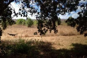 Benin Jagdgebiet Jagdland