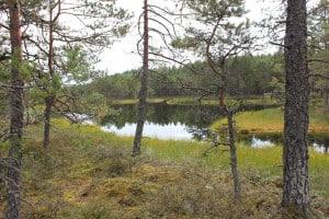 Estland Jagdgebiet Jagdland