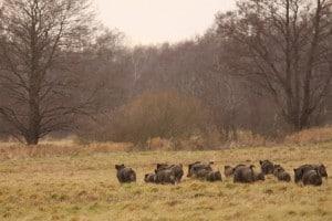 Lettland Jagdgebiet Jagdland