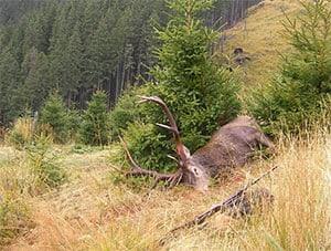 Jagd-Europa