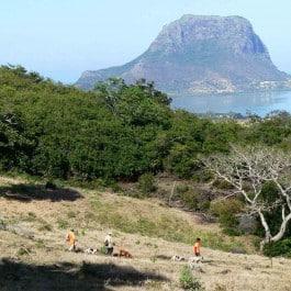 Jagdreise-Mauritius