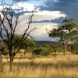 Jagdreise-Namibia