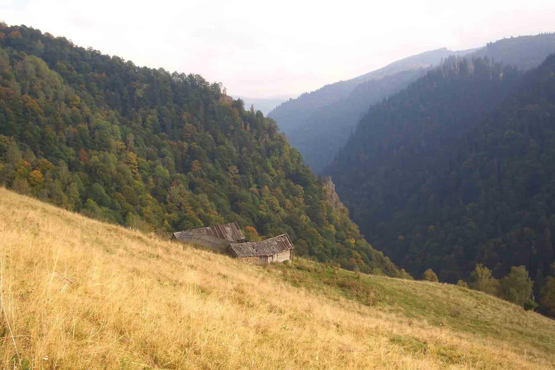 Jagdreise-Rumänien