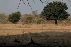 Jagdreise-Simbabwe