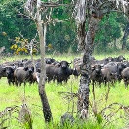 Jagdreise Mosambik Profijagdreisen