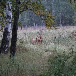 Russland-Jagdland-Jagdreise