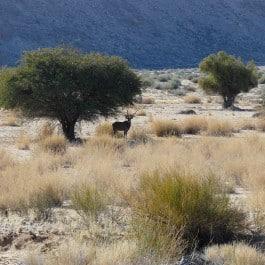 Suedafrika-Jagdland-Jagdreise
