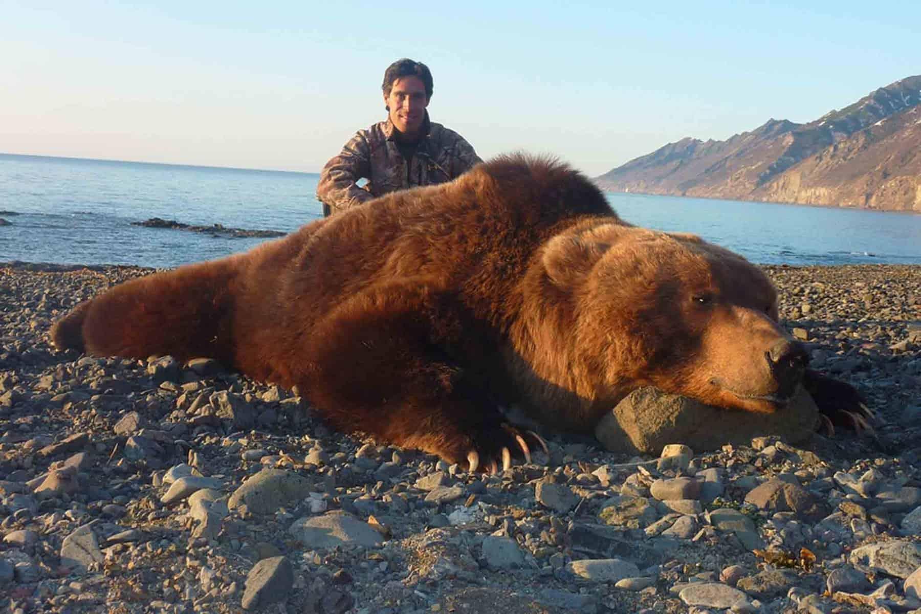 Wildtierjagd-Bär