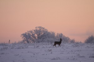 Polen Jagdgebiet Jagdland