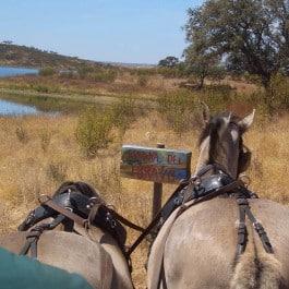 Portugal Jagdgebiet Jagdland